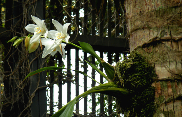 Orchid Growing Out of Tree