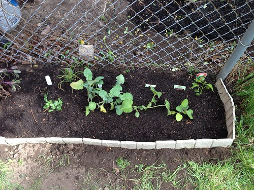 Sweet peas, onions, broccoli, eggplant, and hot peppers