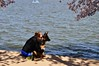 Washington DC | A girl and dog by kobito