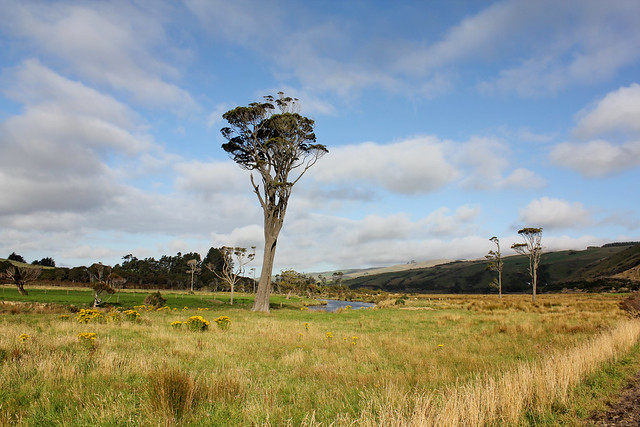 Catlins trees