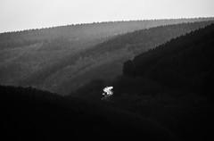 Route perdue dans la forêt