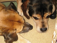 Image of two sweet dogs, friends, companions and whose love for each other is awesome and beautiful!