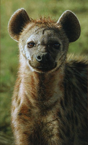 "'(Hyena) Portrait of a Princess' oil on board 19½"" x 12"