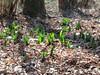 dieci giorni alla primavera