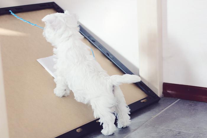 koiranpennut (6 of 10)