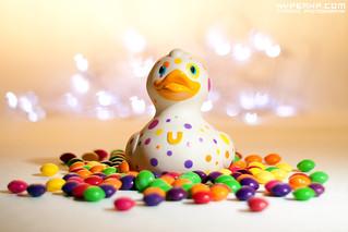 Bud Ducks (1)