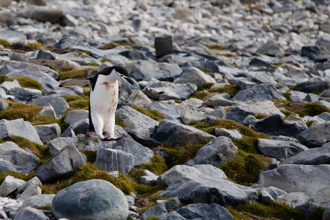antarctica-blog-13