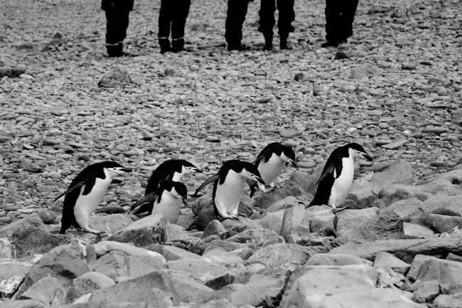 antarctica-blog-15