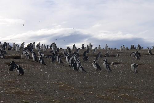 Punta Arenas-45