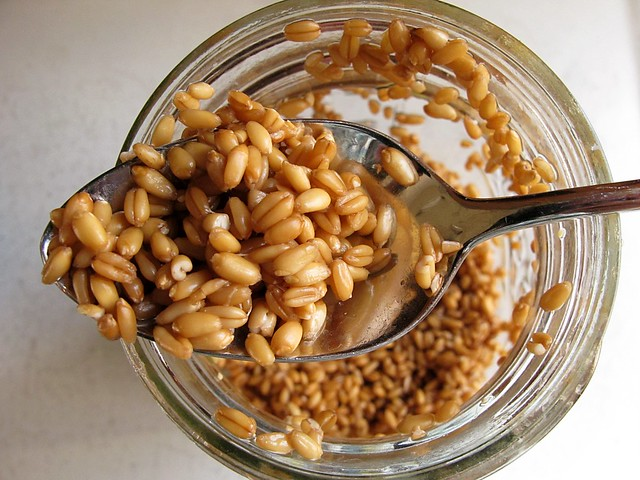 barely sprouted wheat berries