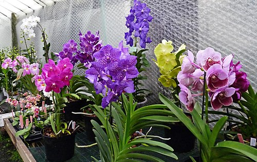 Beautiful Orchids Orchid Paradise Newton Abbot Devon