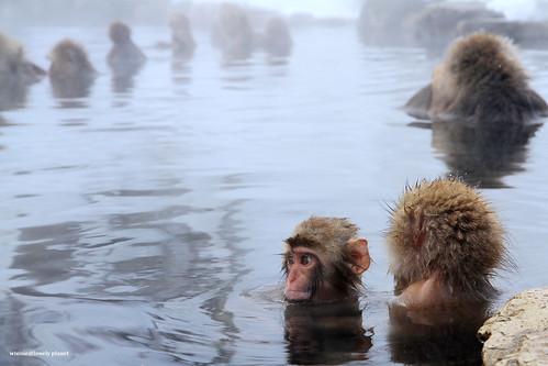 MonkeyPark_7D (24)