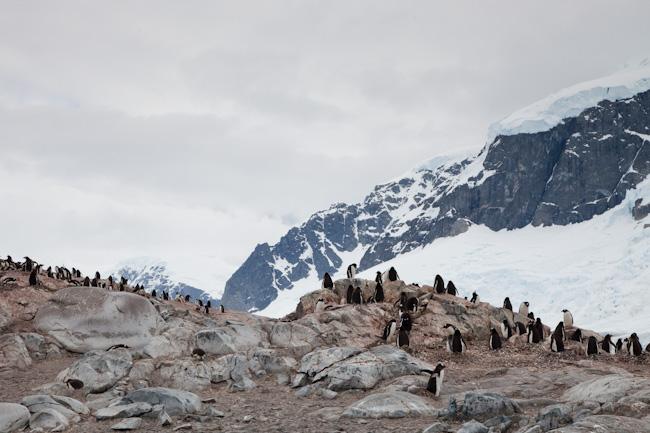 antarctica-blog-53