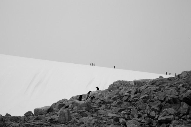 antarctica-blog-63