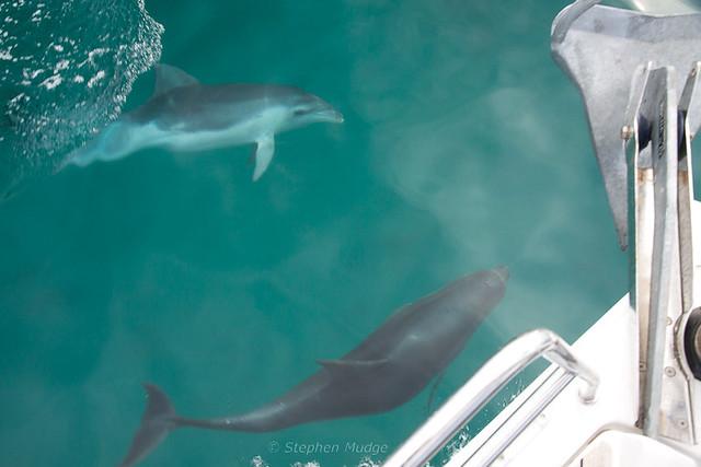 9_Freycinet dolphins