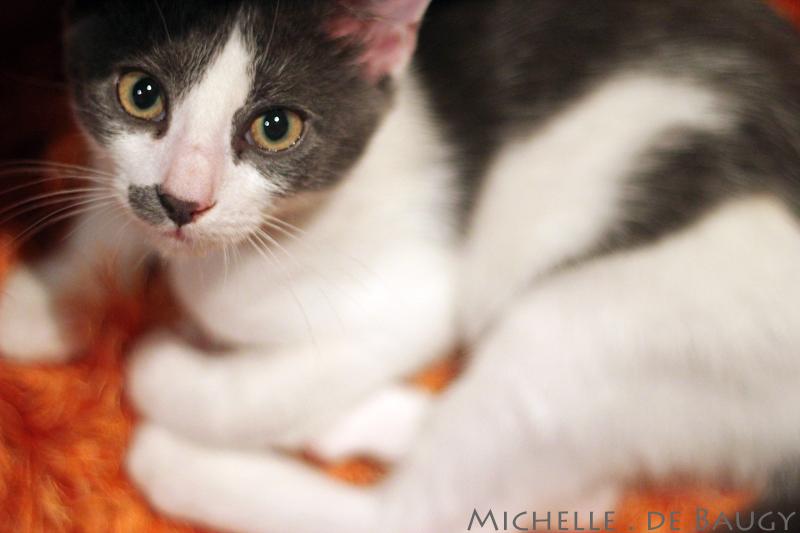 kittenblog009