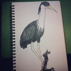 sketch: Pied heron