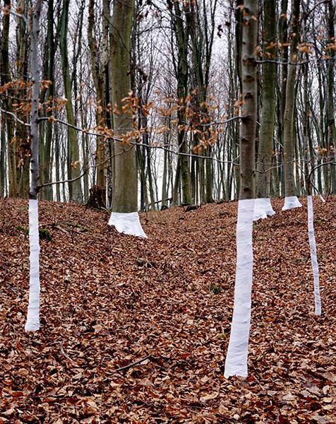 Zander Olsen_Tree, Line_005