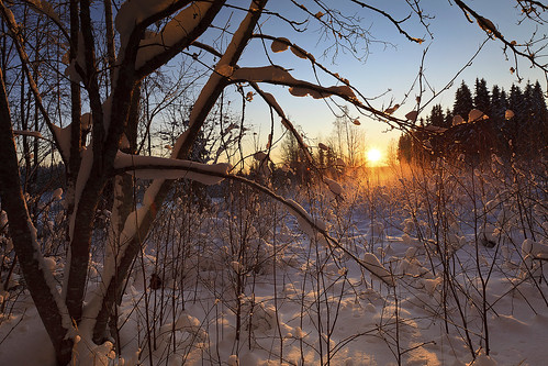 morning trees winter snow sunrise suomi finland early bushes