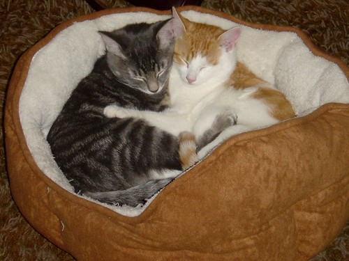 hugging_kittens