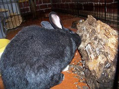Jupiter likes old logs too