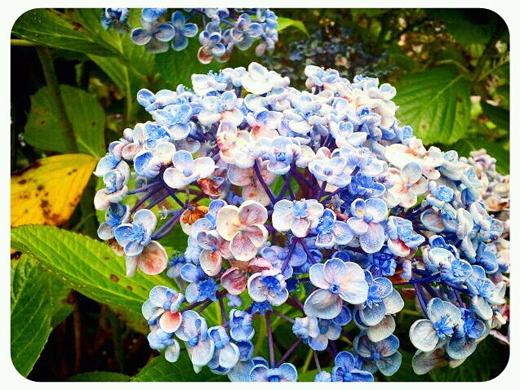 4_flowers. titirangi markets