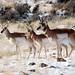 Yellowstone Winter: Wildlife