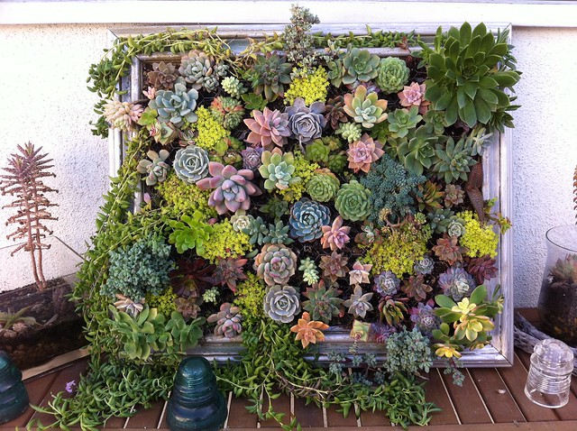 Diy: Framed Vertical Succulent Garden Flowers, Plants & Planters