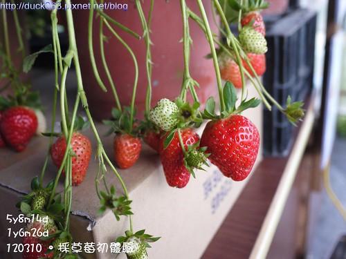 P1180108莓