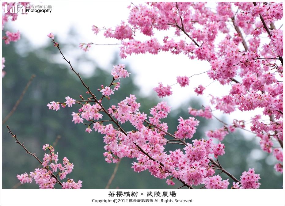 Wuling_0157