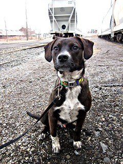 Train Yard Dog