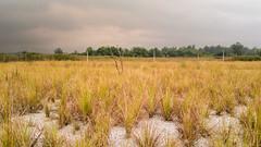 Lorong Halus, Punggol/Sengkang PCN