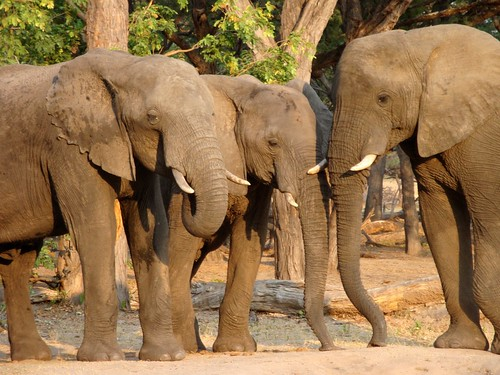 Una famiglia di elefanti nel Hwange National Park (Zimbabwe)