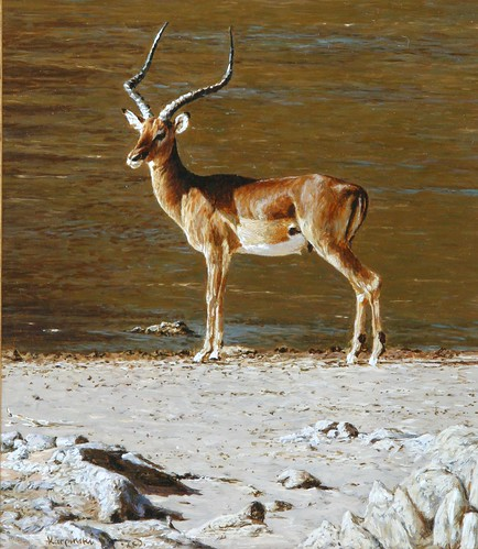 "'Impala' oil on board 8¾"" x 7½"