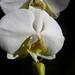 20120310_orkideak eta landareak-25