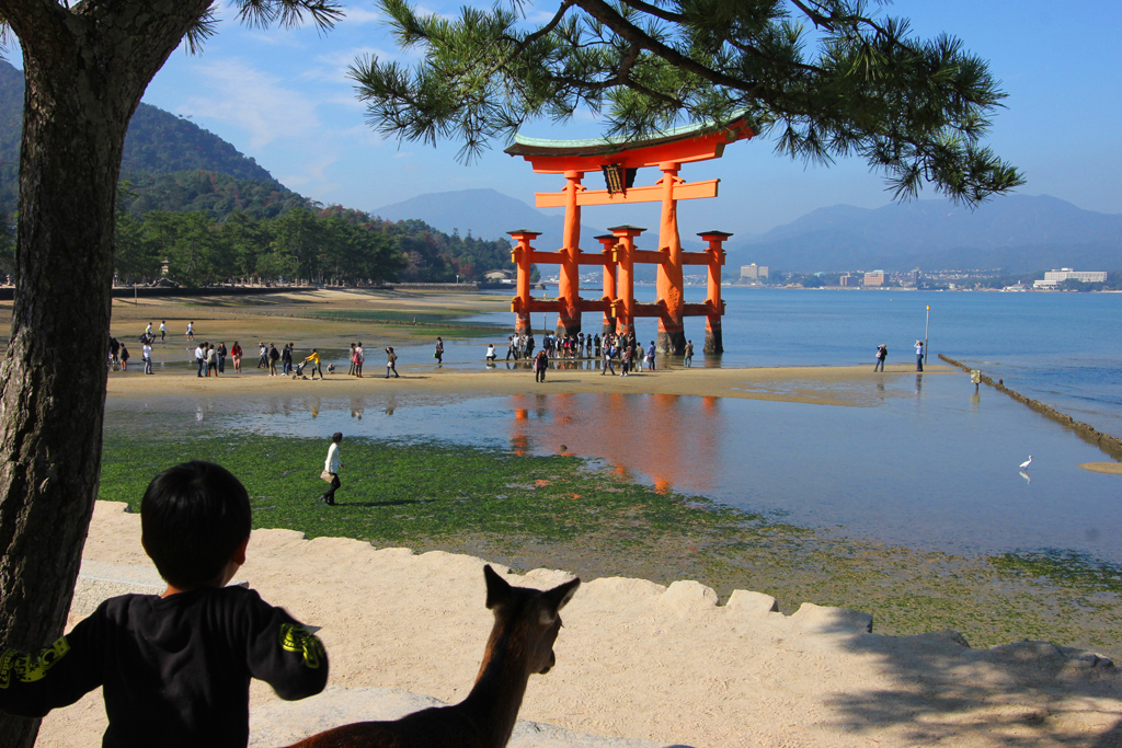 Miyajima One day tour (9)
