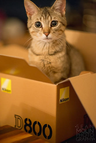 I CAN HAS D800?