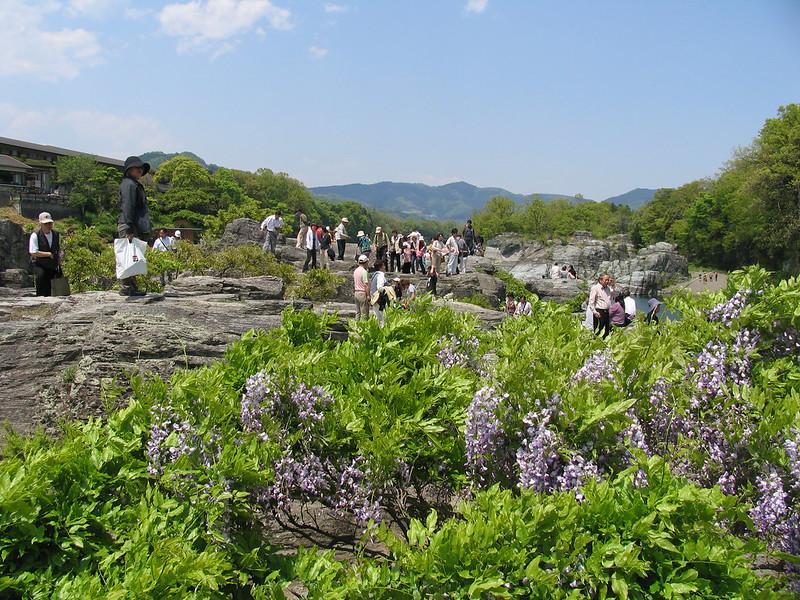 岩畳と藤の花
