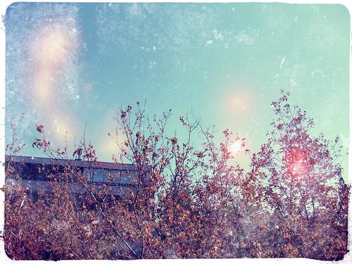 otoño en suecia de provi by mlopezg