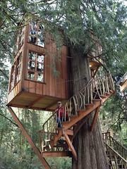 wood, tree house,
