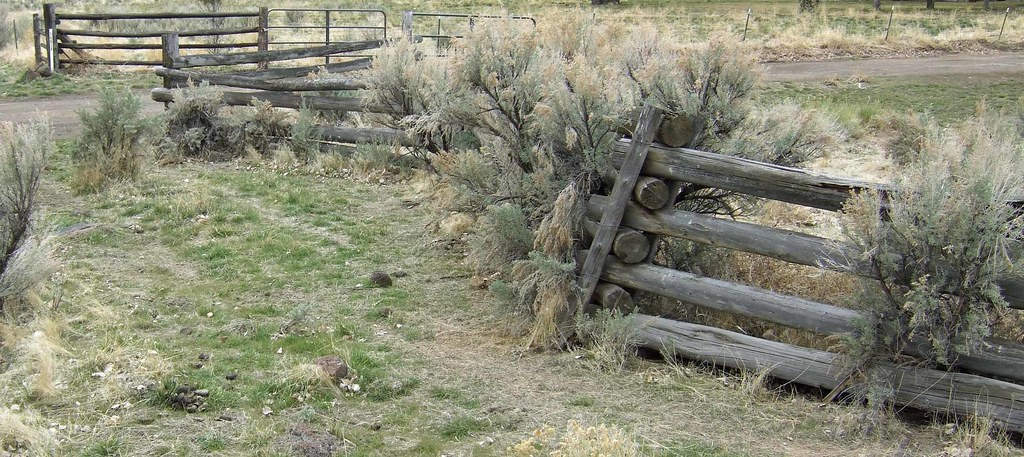 Fence vs Sagebrush
