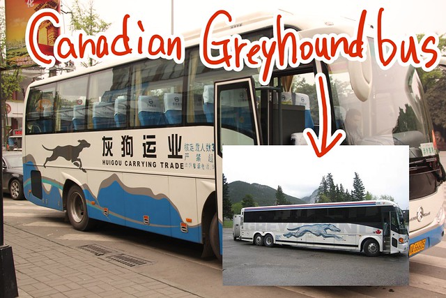 Greyhound bus??