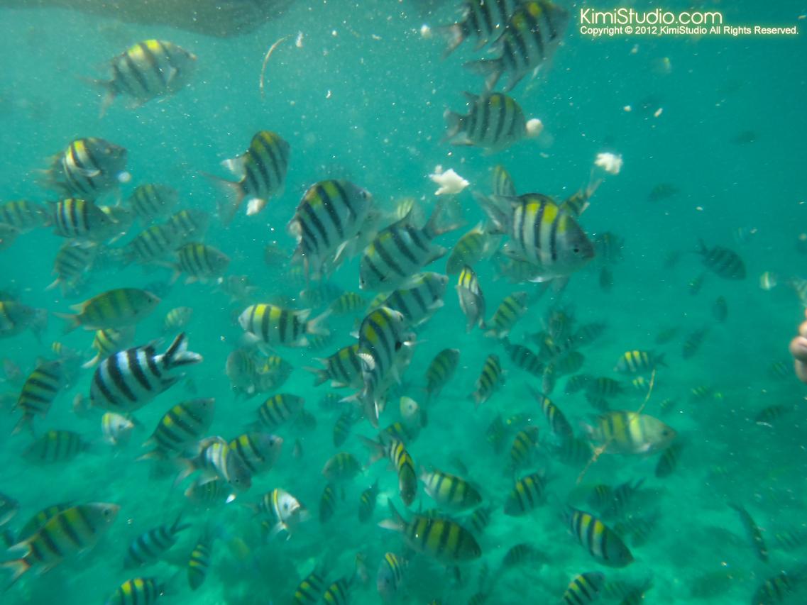 2012.04.19 Philippines-Cebu-Caohagan Island-150