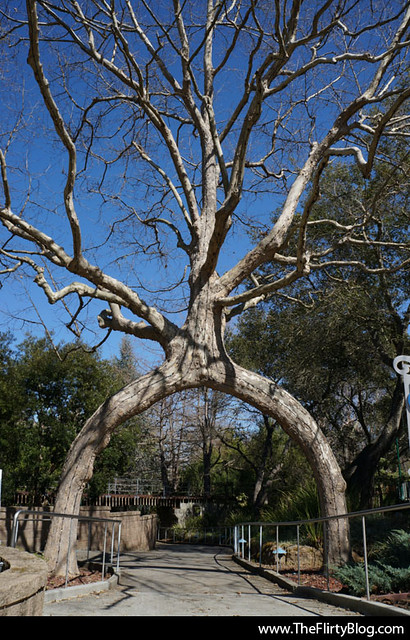 Sony Nex 5r Unedited408 Gilroy Gardens Circus Tree
