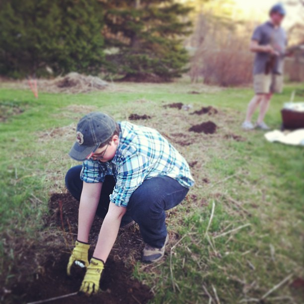 nearly done planting trees and shrubs - Adam plants blueberries #unschooling #homestead