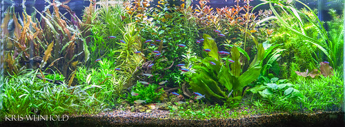 Robert's Planted Aquarium