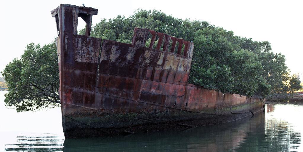 緑生い茂る廃船SS Ayrfield