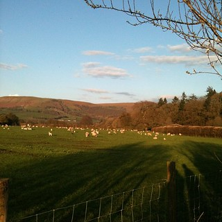 Our visit to the sheep. Such a lovely Spring evening #wonderwool #sheep #wales  #nofilter