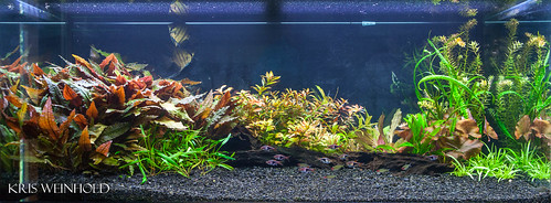Scott's Planted Aquarium