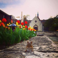 """Joan of Arc in spring with a little furry friend."" - @emilyrunnoe, Class of 2016"